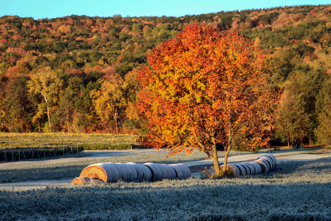 Colors of fall showing up in Bristol (photo)